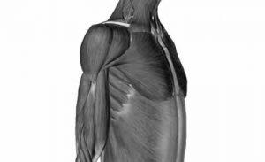 筋肉は動くためにデザインされている。本物の健康が欲しいならば、この真実をまずは深く認識、理解しないと先には進めない。